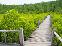 Small wooden walkway a passage into the woods Stock Photography