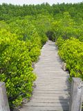 Small wooden walkway a passage into the woods Stock Photo