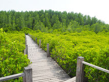 Small wooden walkway a passage into the woods Stock Image