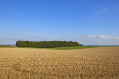A small woodland beside a harvested wheat field Royalty Free Stock Images