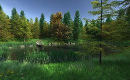 Small Woodland Lake with Jetty Stock Photos