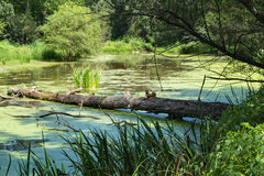 Small Woodland Pond Stock Photos