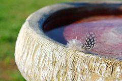 Small Woodpecker Feather on Birdbath Royalty Free Stock Image