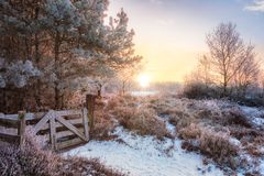 Meadow with frost in Netherlands stock photography
