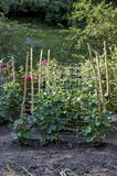 Small yard with cucumber bed in the vegetable garden Stock Images