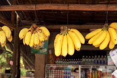 Small yellow bananas. Hanging on hooks Stock Images