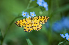 Free Small Yellow Butterfly Moth Stock Photo - 97939550