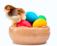 Small yellow chick with easter eggs. isolated Royalty Free Stock Image