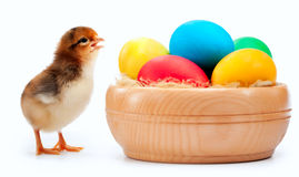 Small yellow chick with easter eggs. isolated Royalty Free Stock Photos