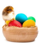 Small yellow chick with easter eggs. isolated Royalty Free Stock Photography