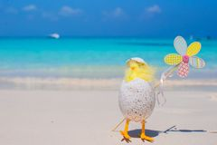Small yellow chicken and flower on the white beach Stock Photography