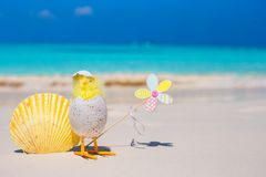 Small yellow chicken and shell on the white beach Royalty Free Stock Image