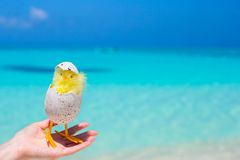Small yellow chicken on the white beach Stock Photography