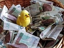 A small yellow cypher in a basket with paper money. Money does not peck the chickens. Polish paper banknotes. Donations for those stock photos