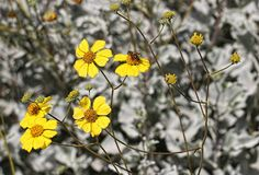 Small yellow flowers on black and white background Stock Image
