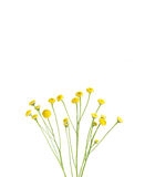Small yellow flowers  Royalty Free Stock Image
