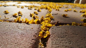 Small yellow flowers fall on foot path Stock Photography