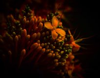 Small yellow flowers. Macro red botanical flora royalty free stock images