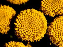 small yellow flowers on a macro scale stock photo