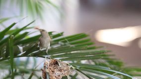 Small yellow humming bird stock video footage