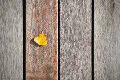 Small yellow leaf on a weathered wooden boards Royalty Free Stock Images