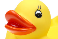 Small yellow plastic duck Stock Image