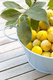 Small yellow plums Stock Photos