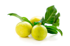Small yellow plums. Royalty Free Stock Photos
