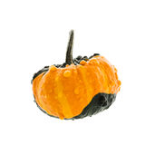 Small yellow pumpkin isolated on white background Royalty Free Stock Photography