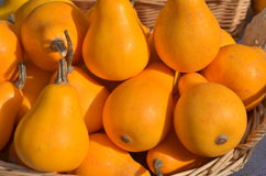 Free Small Yellow Pumpkins Royalty Free Stock Images - 84292419
