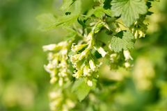 Small yellowish flowers in nature Royalty Free Stock Images