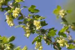 Small yellowish flowers in nature Stock Photos