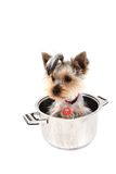 Small yorkie dog in the pot Royalty Free Stock Images