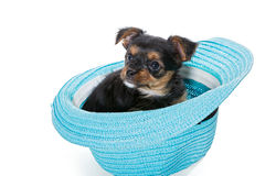 Small Yorkshire Terrier sitting in a beach hat Stock Photo
