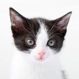 Small, young cat Stock Photos