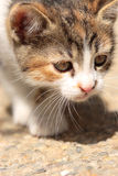 Small young cat exploring surroundings Stock Photo