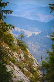 Small young fir tree on a cliff on the Pietrele Doamnei Peak Lady`s Stones cliff. View of a small young fir tree on a cliff on the Pietrele Doamnei Peak Lady`s stock photography