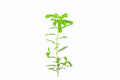 Small young green plant on white background, Stock Photos