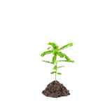 Small young green plant on white background, Depending on the so Royalty Free Stock Images