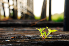Small young plant Royalty Free Stock Photography