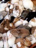 Small young rabbits sleeping together Stock Photography