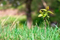 Small young tree growing in the forest Stock Image