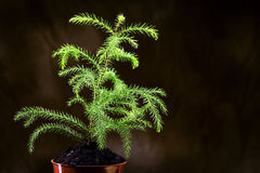Small Young Tree Growing Strong Lit From Above Royalty Free Stock Photography