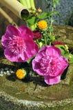 Small zen garden Stock Images