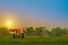 Small zinc hut in the rice feild stock images