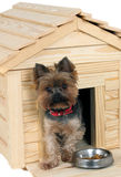 Smalldog with wooden dog's house. Small wooden dog's house and small dog stock image