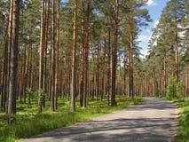 Smalle asfaltweg die pijnboombos doornemen in een heldere zonnige de zomerdag stock foto