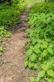 Smalle grondweg in het gras royalty-vrije stock foto