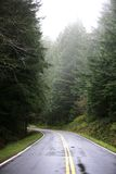 Smalle Weg in het Bos stock afbeelding