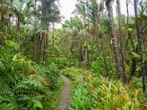 Smalle weg hoewel het tropische regenwoud van Gr Yunque in Puerto Rico royalty-vrije stock foto